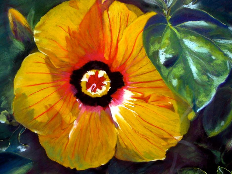 Currumbin Hibiscus