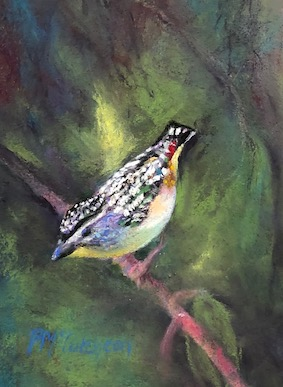 Spotted Pardalote