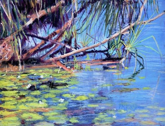 Lilies, Yellow waters, Kakadu