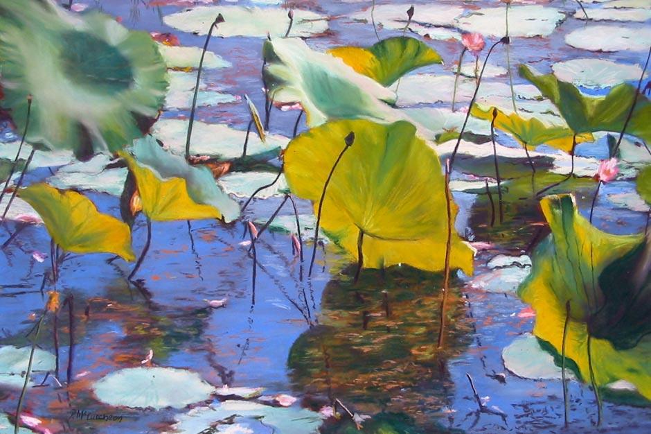 Waterlilies, Fogg Dam II